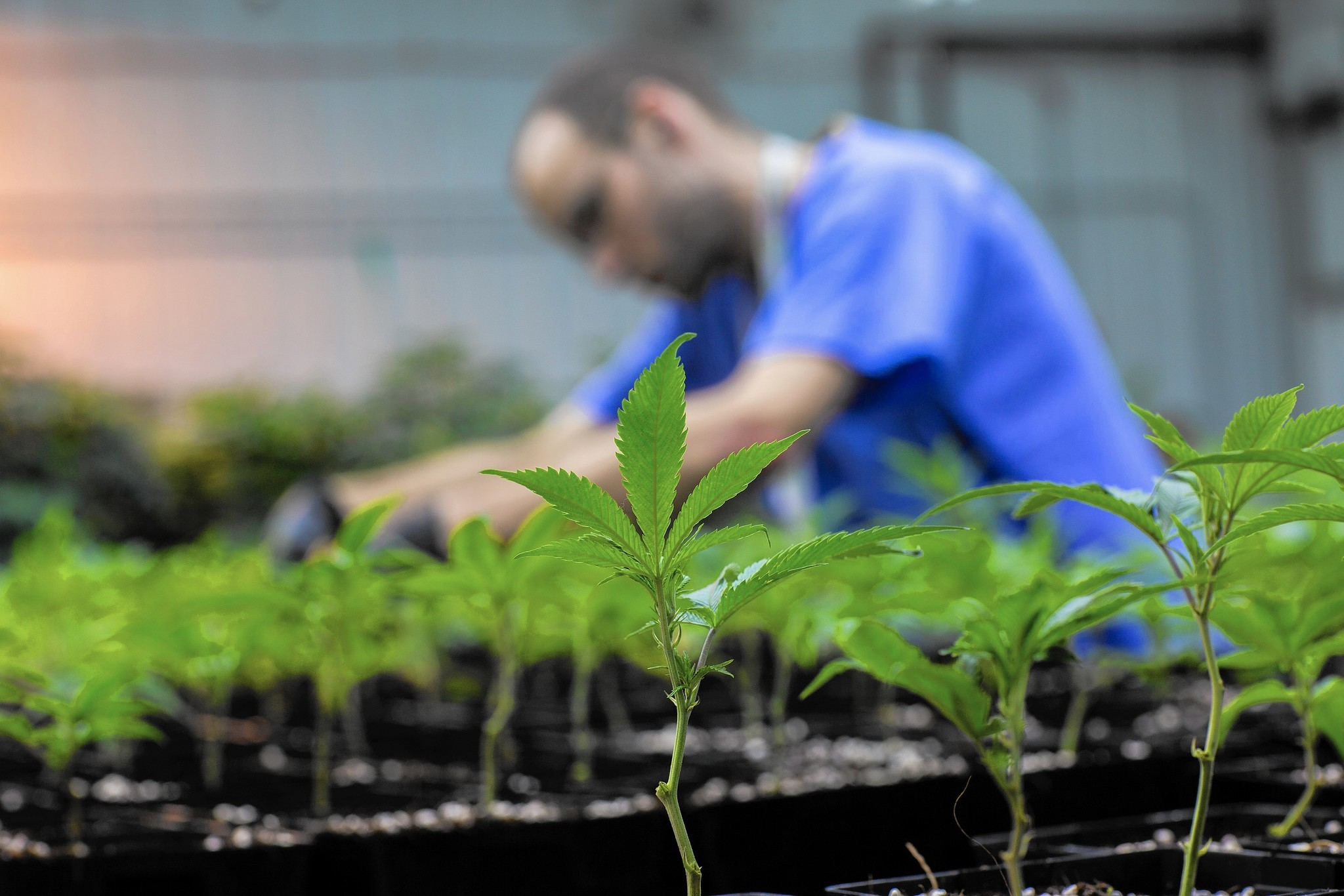 Setting Up A Cannabis Business