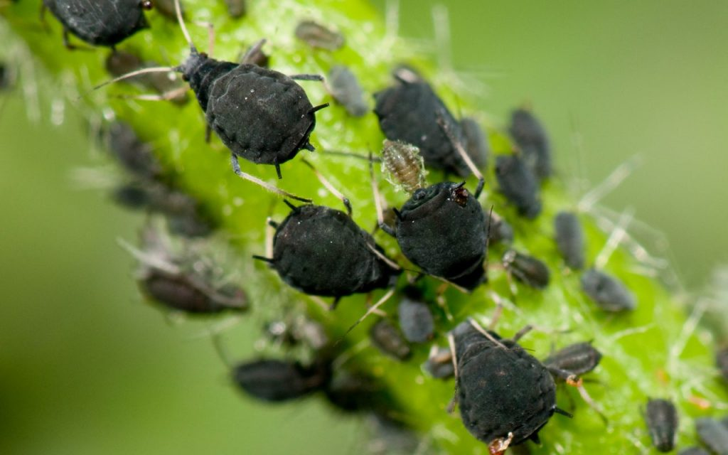tips banishing pests