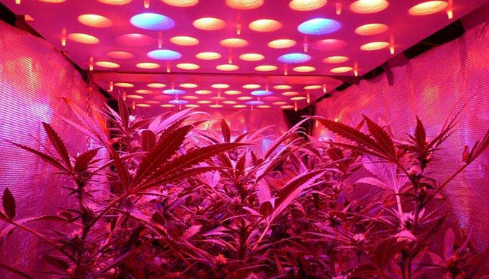 LED & HID Grow Lights – Marijuana Lighting